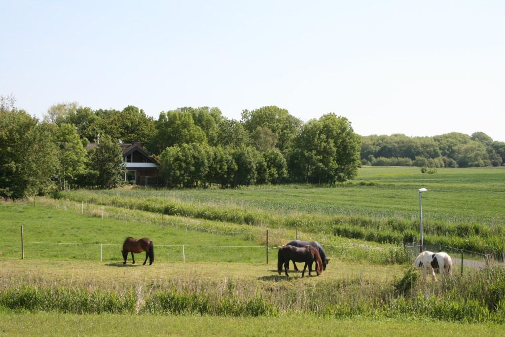 Ferienwohnung mit Hund mit Pferd