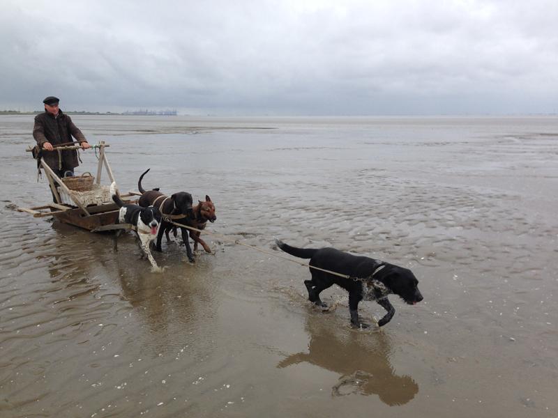 Ferienwohnung Pferd Hund, Hundeschlitten
